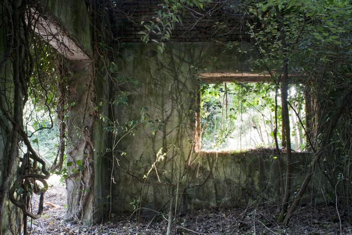 Isola della Certosa, 2